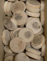 Dubové suky (větev), 30 x 7 mm, 1 ks