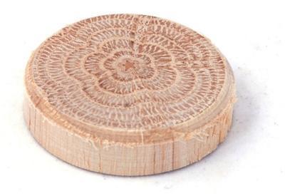 Dubové suky (větev), 35 x 7 mm, 10 ks - 1